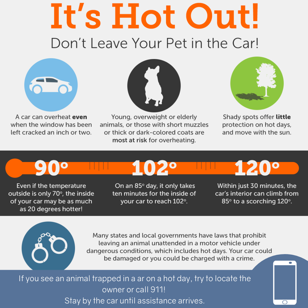 Hot Weather Safety Tips