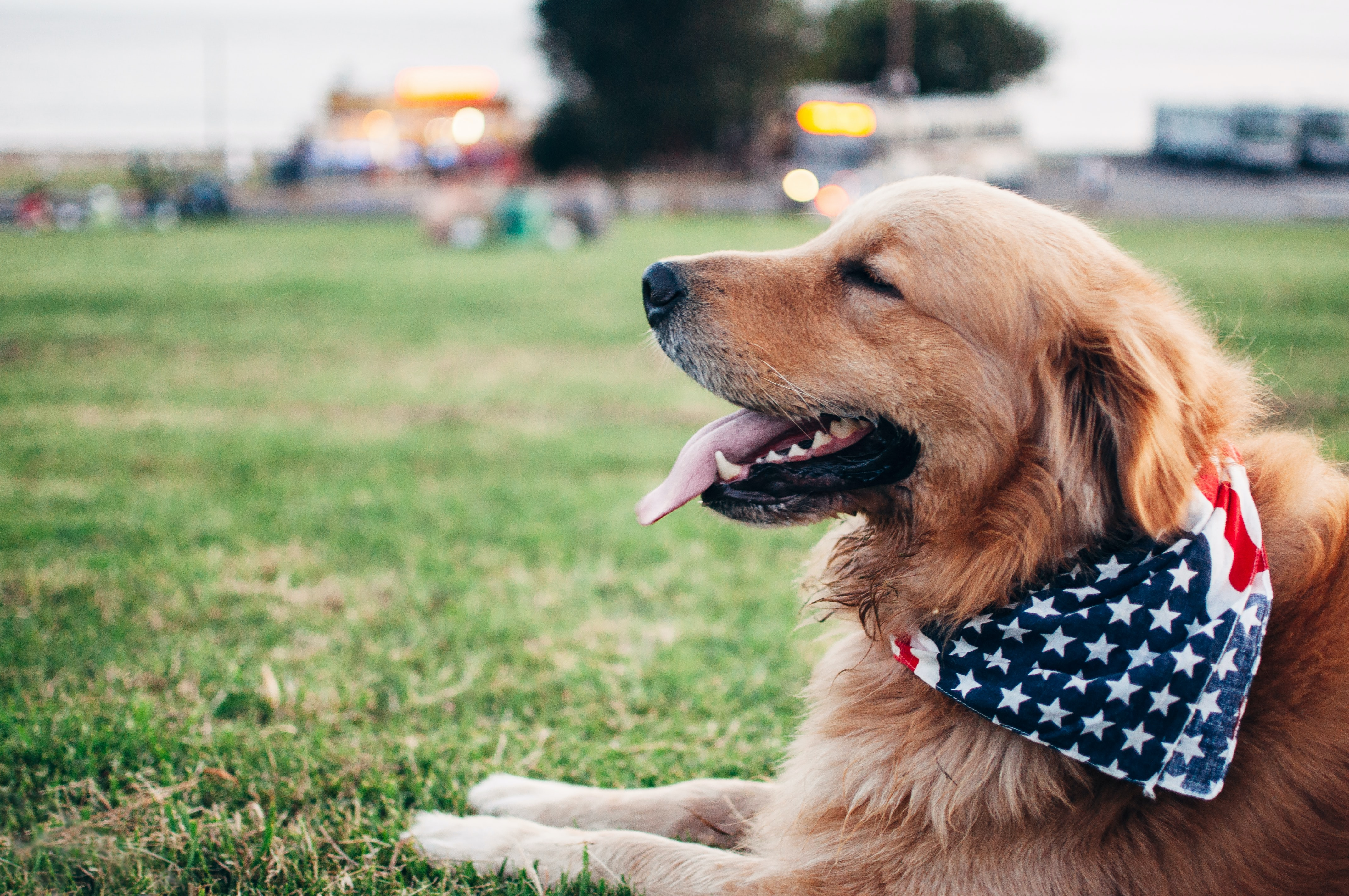 4th of July: Keeping Your Pet Safe!